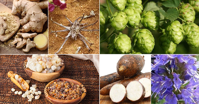 Pain Controlling Herbs